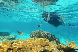 boy-snorkeling in the turks and caicos