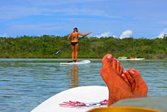 Stand Up Paddle Boarder in the mangroves