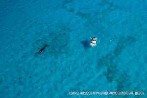 aerial shot of a dive provo dive boat and whale